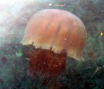 2006-12-13echizen.jpg